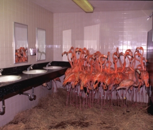 BancroftBathroomFlamingos