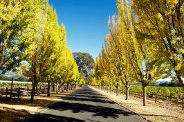 The Whet Palette Napa Valley Wine Country Itineraries